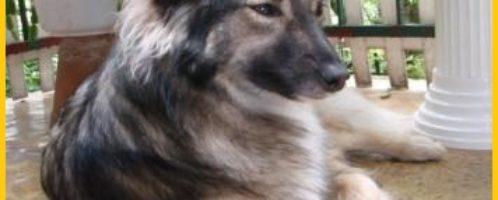 Efekty działania Lamininy – moje, rodziny, psa i kota