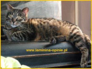 efekty działania lamininy u kota