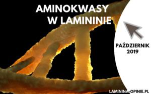 Aminokwasy w Lamininie