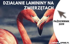 Laminina dla zwierząt – zobacz jak działa