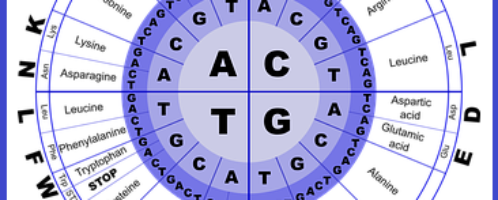 Aminokwasy, czyli gospodarka białkowa