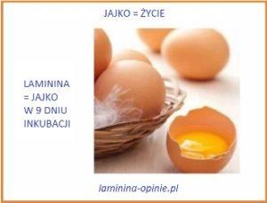laminina suplement przyszłości - laminina-opinie.pl